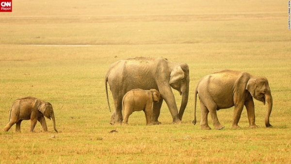 5 Days 4 Nights Masai Mara - Lake Nakuru - Amboseli - Kenya Safari Package